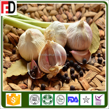 haccp certified products garlic paste