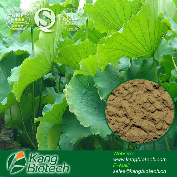 natural herb slim Lotus Leaf Extract Powder
