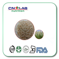 GMP factory supply 100% Pure Natural Psyllium husk powder