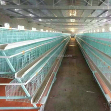 South Africa Nigeria poultry farm A type cage for egg laying chicken