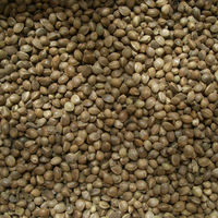 chinese hemp seed brid feed hemp seeds