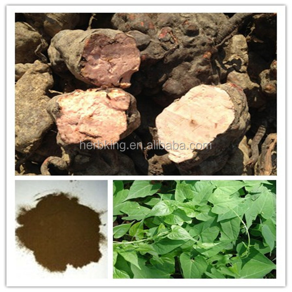 Radix polygoni mulitiflori powder/Polygonum multiflorum Thunb extract