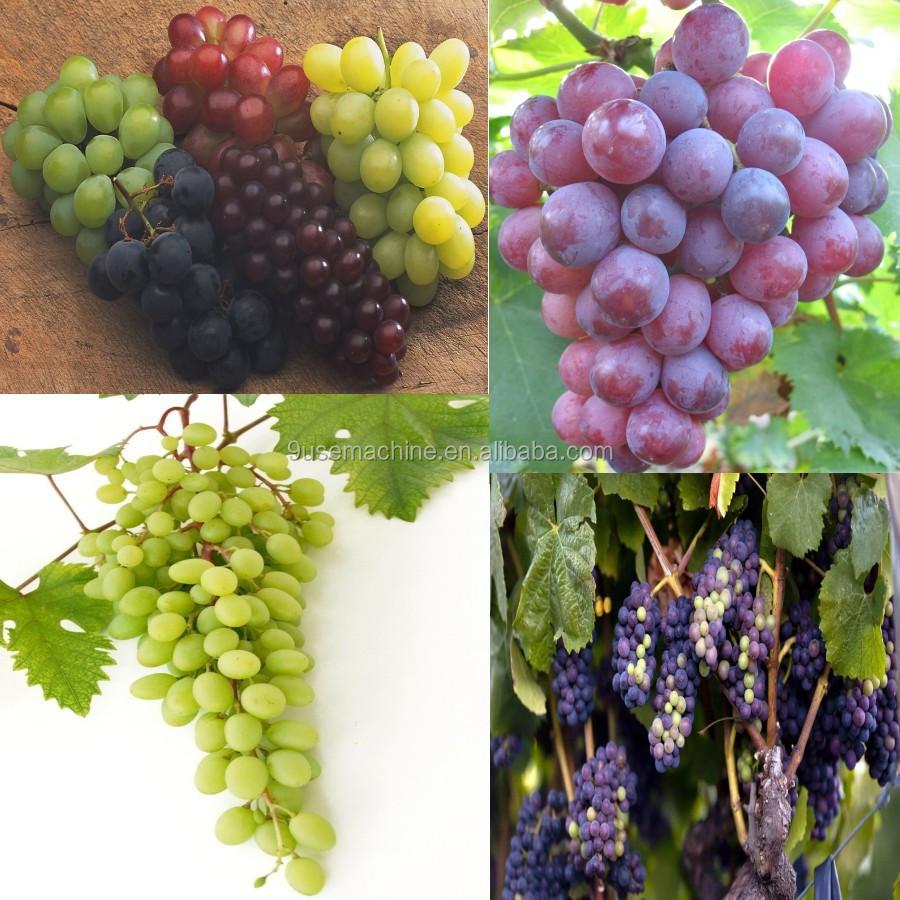 High Quality Grape Crushing Machine - Buy Grape Stem ...