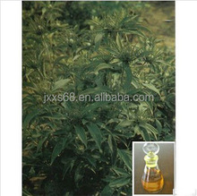 Natural Atractylis Oil have good function for immune & anti-fatigue