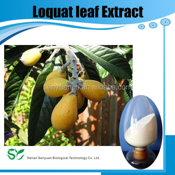 Loquat Leaf Extract 25%-98% Ursolic Acid by HPLC & 5:1;10:1;Extract Ratio by TLC