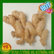 professional yellow color fresh ginger supplier