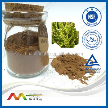 GMP&NSF Health Products Natural Buchu Leaf Extract