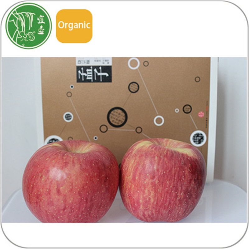 average price fresh fuji apple fruit with high quality