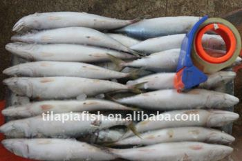 2016 Newly Caught Mackerel Fish for Wholesale