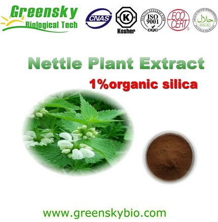 Nettle powder, Stinging nettle root extract, Nettle extract silica
