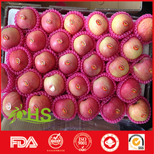 Hot selling apples and others with low price fresh honey fuji apples