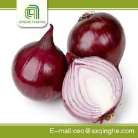 big onion with CE certificate