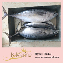 King Marine Auxis Thazard WR Seafrozen Frozen Bonito Fish For Sale