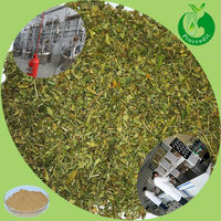 100% Natural Mexican Damiana Extract Powder
