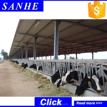 low cost livestock shelter dairy farm shed for live cattle and goat shed