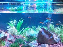 completely submersible aquarium led light for fish tank