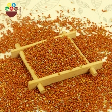 Top quality hulled red millet in husk with reasonable price
