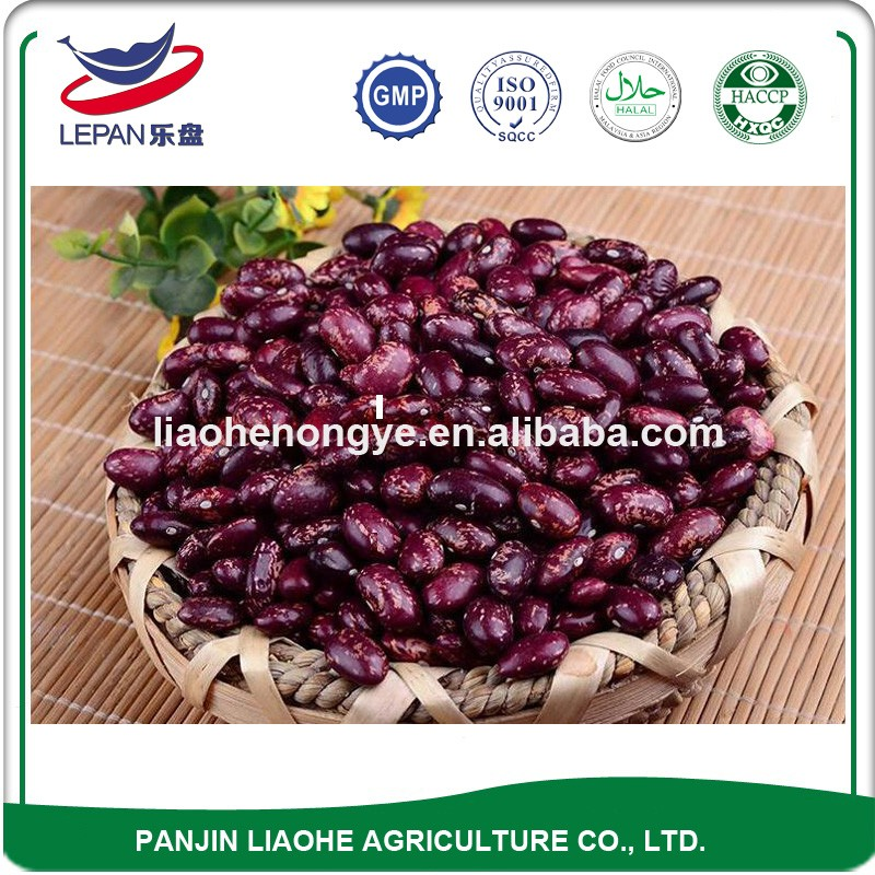 Best Sale HPS Grade A Newest Crop All Types of Round Rajma Chitra Price of Spotted Beans