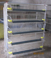 hebei metal quail bird cages for sale