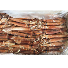 Wholesale frozen africa squid for <strong>bait</strong>