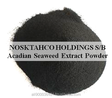 Acadian Seaweed Extract Powder-effective in promotion of growth,development of shoot and roots,and stimulation of cell division
