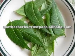 Leaves of neem