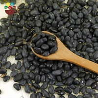 High Quality Black Kidney Bean Sample