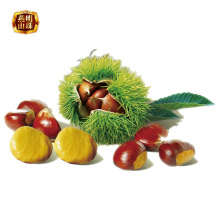 Bulk Sweet Chinese Fresh Chestnuts for Sale