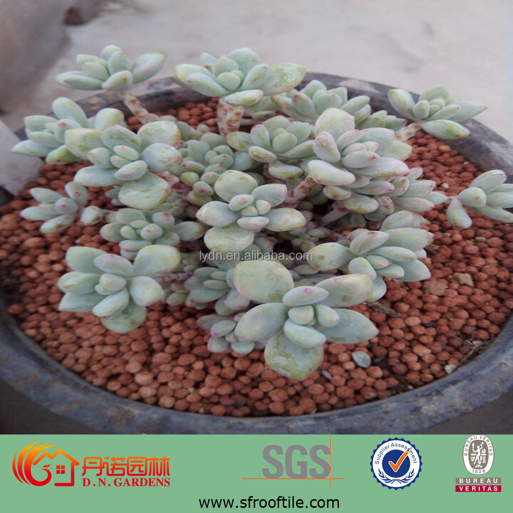 Sanitary red nutrient clay soil used in rooftop garden for for Garden soil for sale