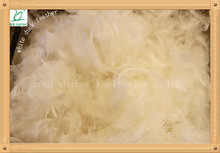 2-4cm white duck feather