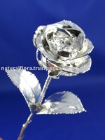 Silver Plated Natural Rose