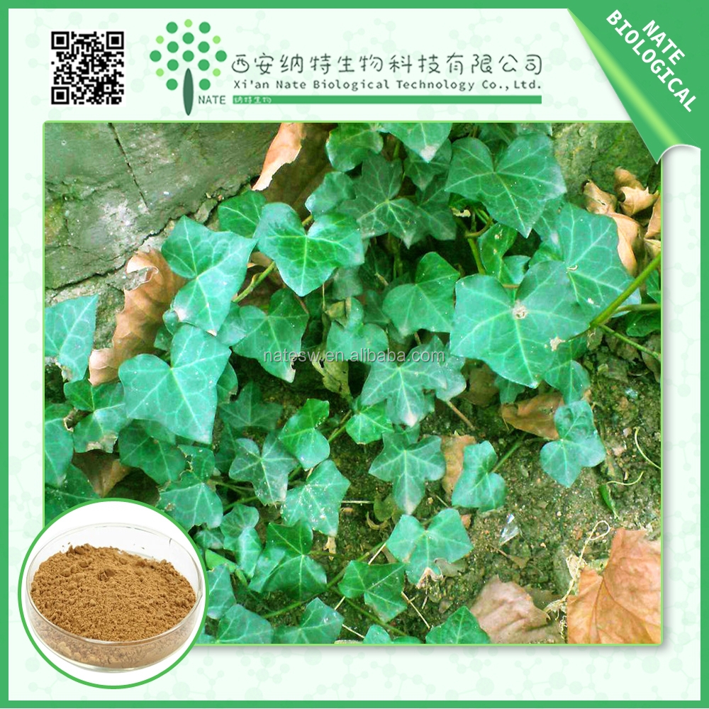 100% pure natural Ivy Leaf Extract 5% Hederacoside C