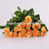 Fresh High Quality Cut Rose Miss Rose Flower 60-80cm Long Queen's Day Rose From Rolane/YunNan