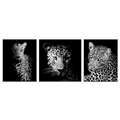Leopard in the Darkness HD Animal Canvas Prints for Bedroom Living Room Wall Decor Photo Printed on Canvas