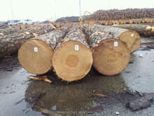 southern yellow pine logs in USA