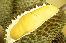 FRESH THAI DURIAN FOR KOREA EXPORT