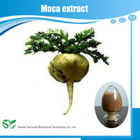 Hot sale Tuber Onion Seed extract/Semen Allii Tuberosi extract/Cure knee pain plant extract