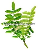 100% natural Boswellia serrata Extract