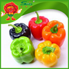 /product-detail/color-peppers-market-price-sweet-round-pepper-fresh-cherry-peppers-60478848071.html