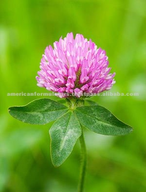RED CLOVER EXTRACT (4:1) SUPPLEMENT