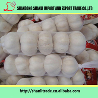 Natural white garlic ,super quality -low price
