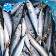 Hot Sale Seafood Frozen Pacific Mackerel Ice Fish