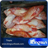 Red Live Tilapia