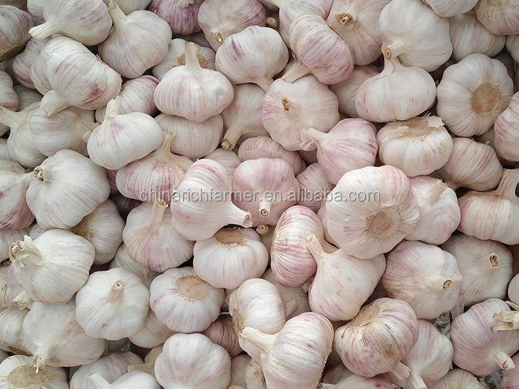 Fresh Normal White Garlic 5.0cm Up In 22Pounds Bag(1Pounds Bar Code Net Bag)