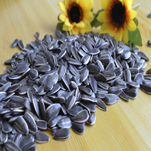 2015 crop round sahpe sunflower seeds 1121