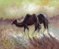 Camel Canvas printings