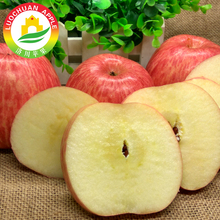 The Fuji apple Luochuan crunchy apple red chief apple