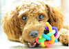 Pet Dog Cat Toy Colorful Rubber Round Ball with Small Bell Toy