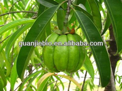 High Quality 100% Natural garcinia cambogia extract side effects