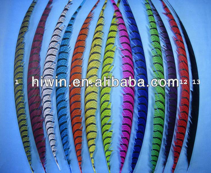 Amherst Pheasant Feather